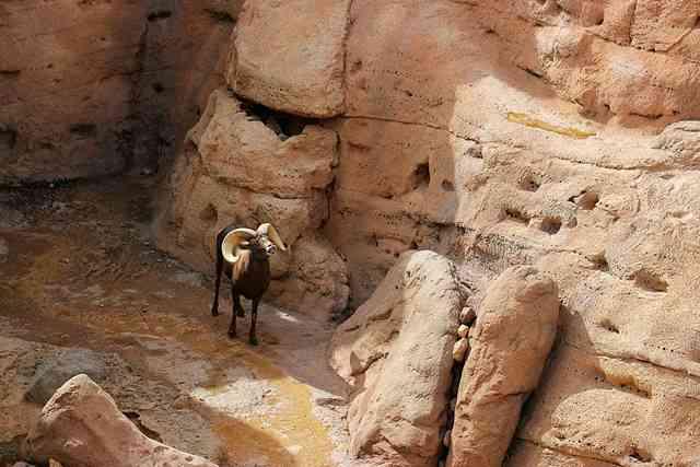 Arizona-Sonora Desert Museum (6)