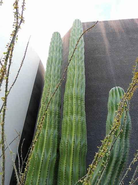 Scottsdale Museum of Contemporary Art (4)