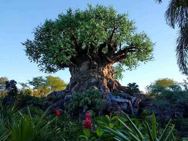 Disney's Animal Kingdom (1)