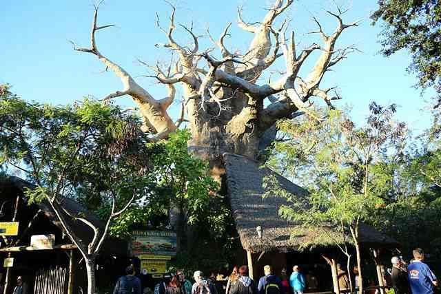 Disney's Animal Kingdom (29)