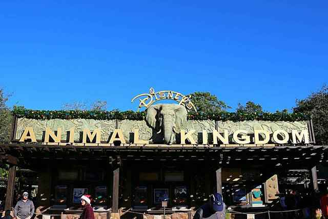 Disney's Animal Kingdom (3)