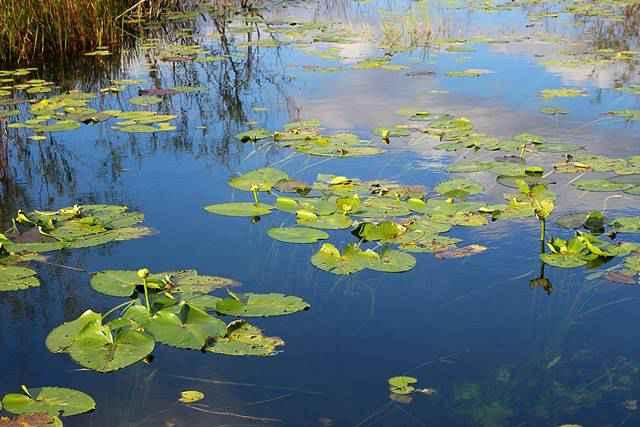 Everglades National Park (2)