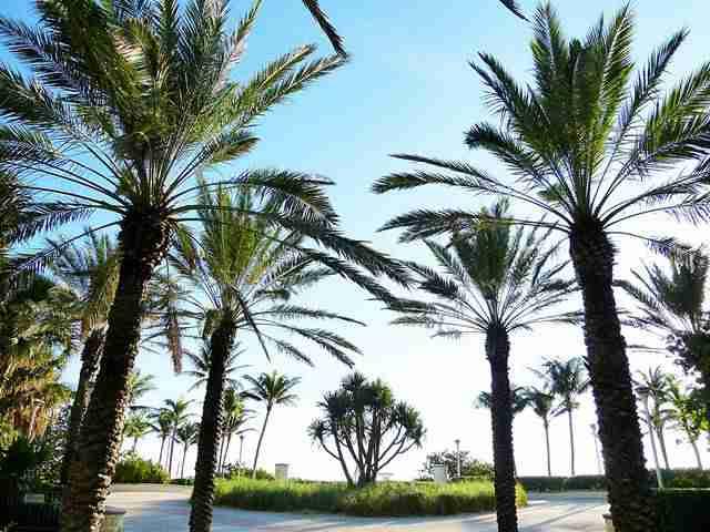 Miami Beach (2)