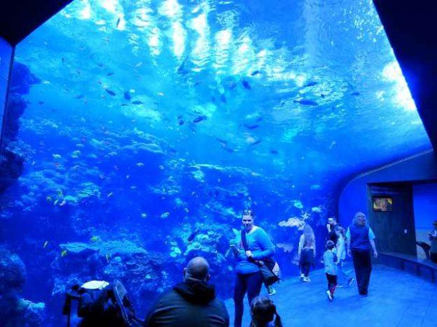 Georgia Aquarium (1)