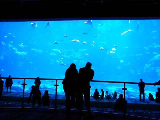 Georgia Aquarium (2)