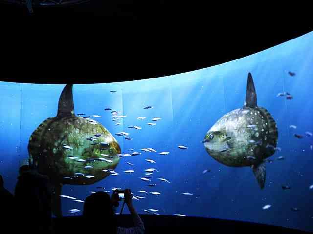 UNSEEN OCEANS AMNH (10)