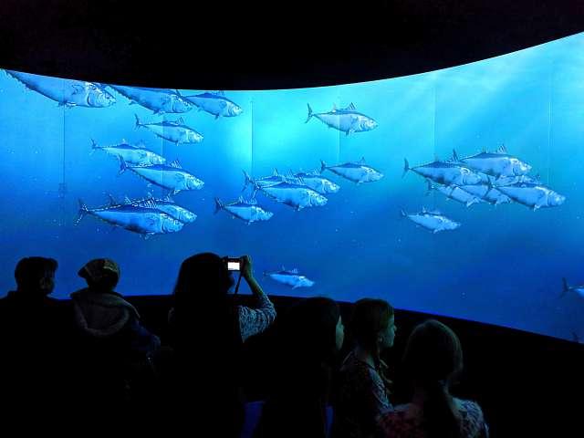 UNSEEN OCEANS AMNH (9)