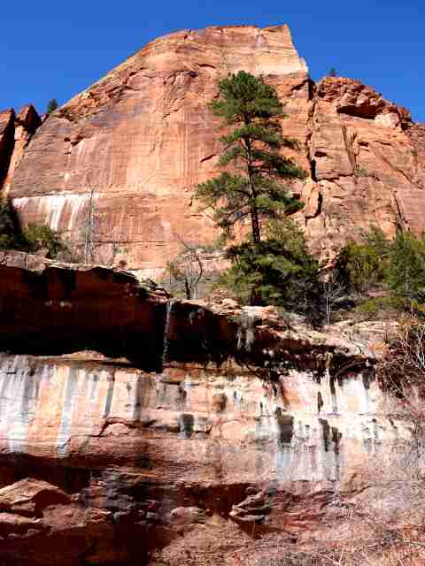 Zion National Park (3)