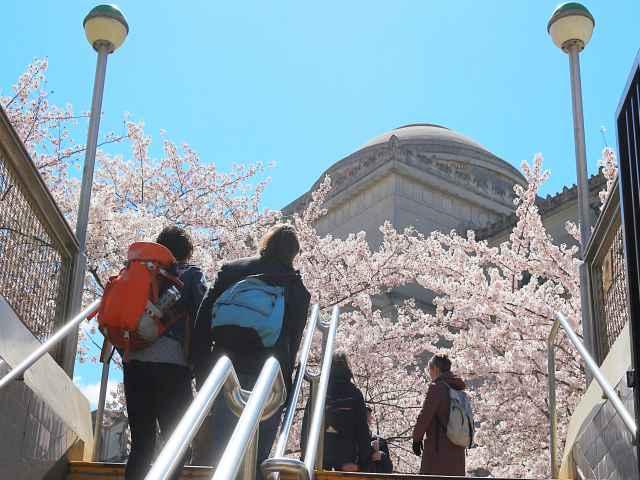 Brooklyn Botanic Garden Cherry Blossoms (15)