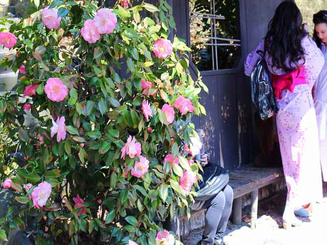 Brooklyn Botanic Garden Cherry Blossoms (2)
