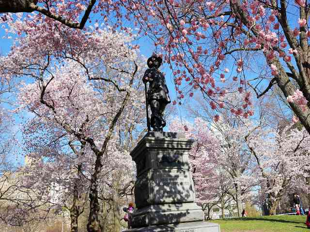 Central Park Cherryblossoms NY (3)