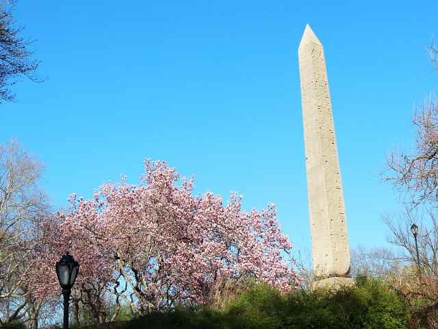 Central Park Cherryblossoms NY (7)