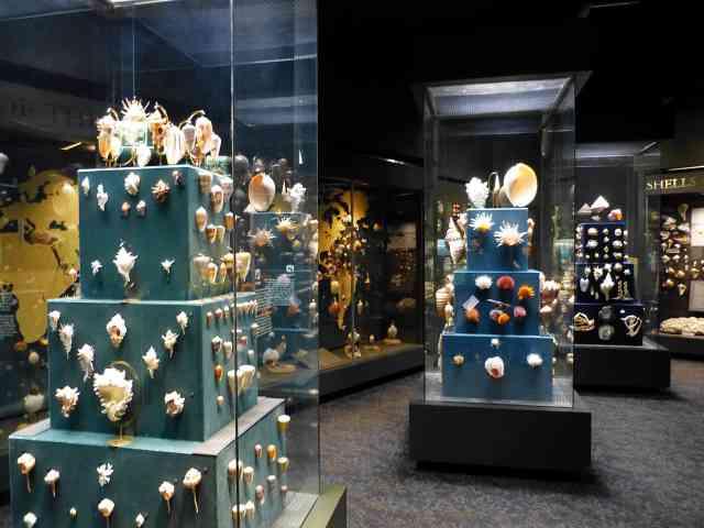 Fernbank Museum of Natural History (11)