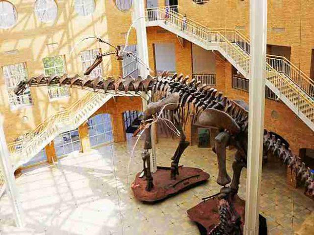 Fernbank Museum of Natural History (20)
