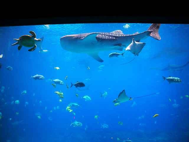Georgia Aquarium (11)