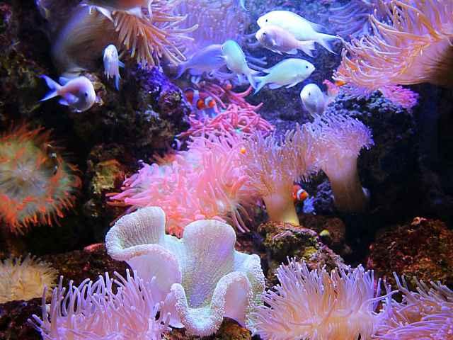 Georgia Aquarium (13)