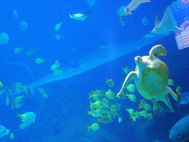 Georgia Aquarium (15)