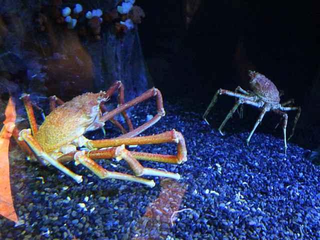 Georgia Aquarium (3)