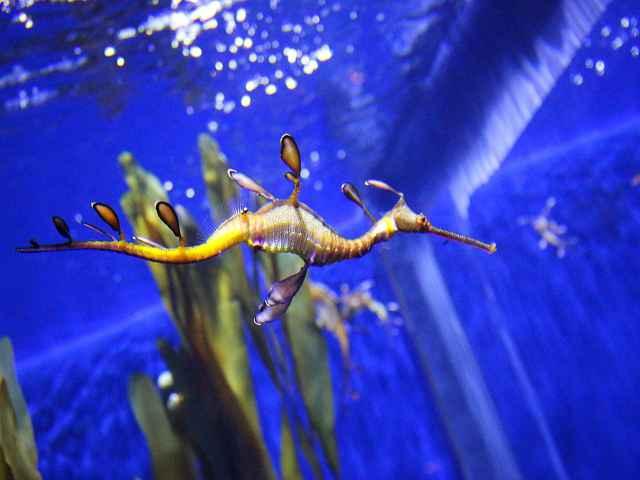 Georgia Aquarium (4)