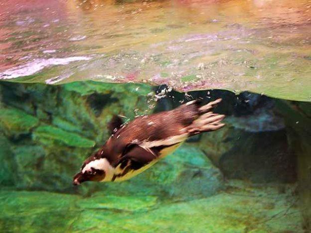 Georgia Aquarium (5)