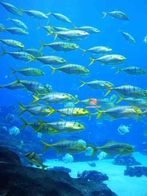 Georgia Aquarium (7)