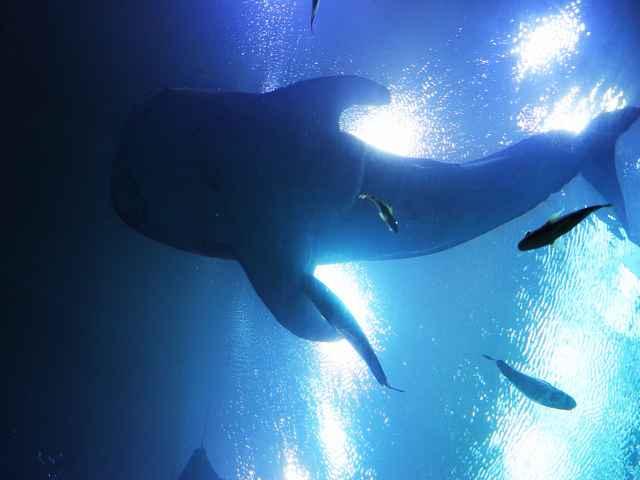 Georgia Aquarium (8)