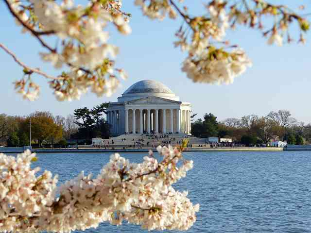 Washington DC Cherryblossom (26)