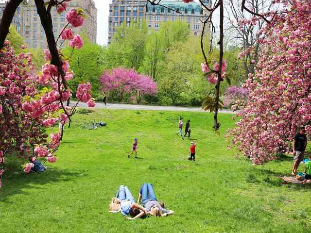 Central Park (12)