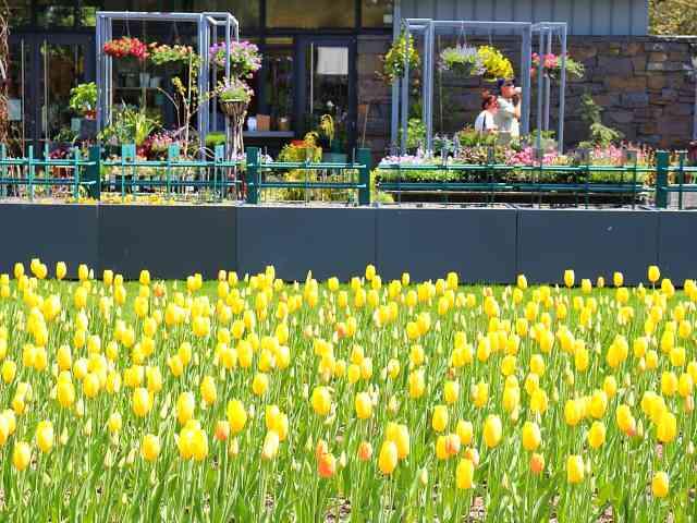 New York Botanical Garden (18)