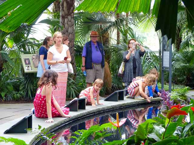 Corpse Flower NYBG (4)
