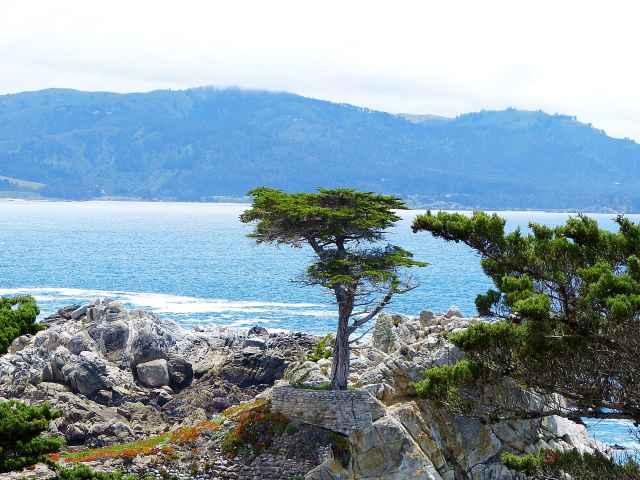 Monterey (21)