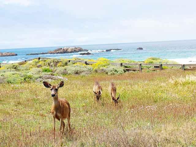 Monterey (25)