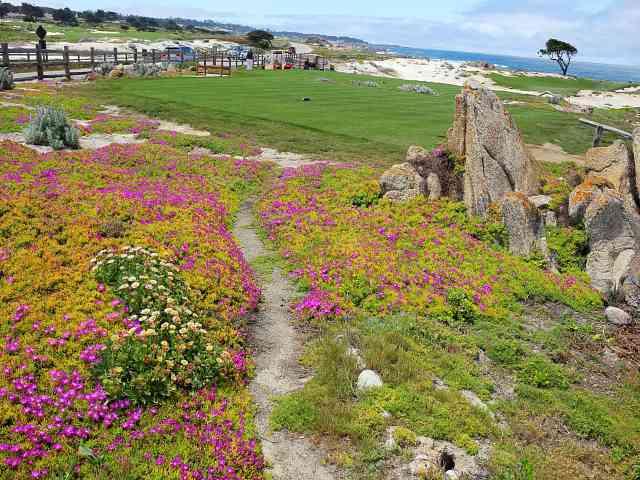 Monterey (27)