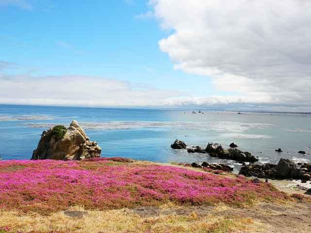 Monterey (38)
