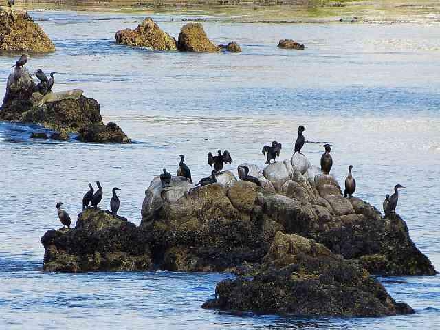 Monterey (40)