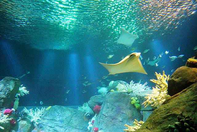 New York Aquarium (15)