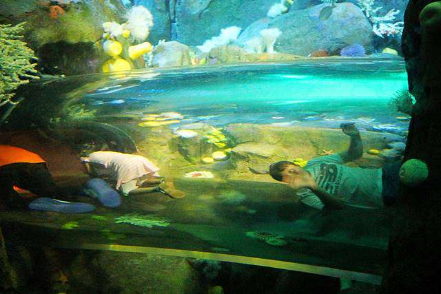 New York Aquarium (16)