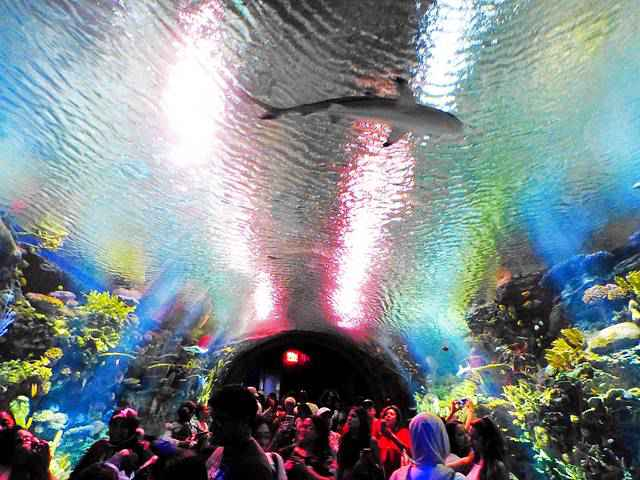 New York Aquarium (29)