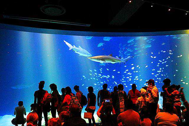 New York Aquarium (9)