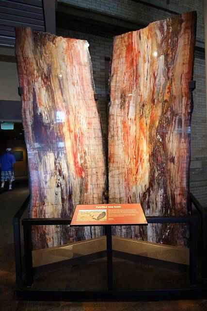 Denver Museum of Nature and Science (10)