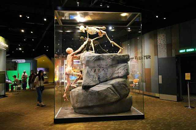 Denver Museum of Nature and Science (13)
