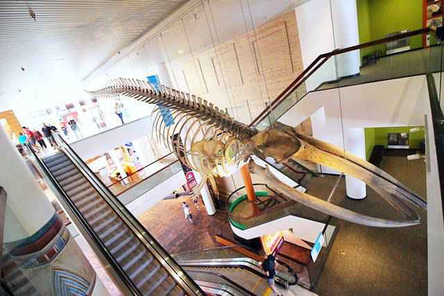Denver Museum of Nature and Science (25)
