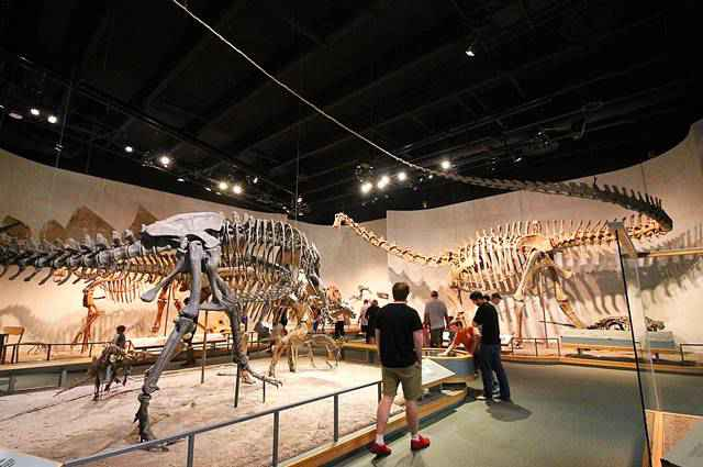 Denver Museum of Nature and Science (4)