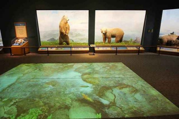 Denver Museum of Nature and Science (5)