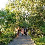 High Line NY (15)