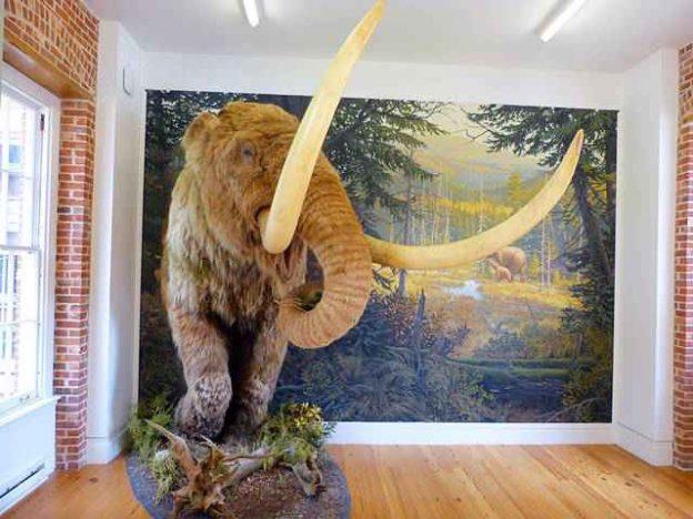 Staten Island Museum (6)
