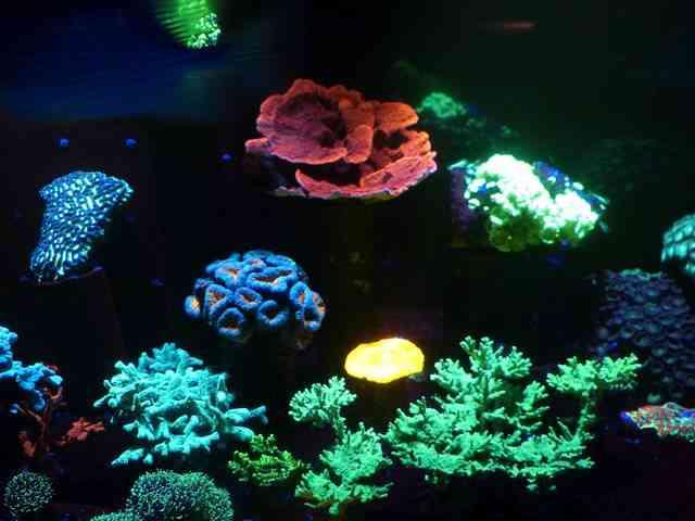 Aquarium de Paris (3)