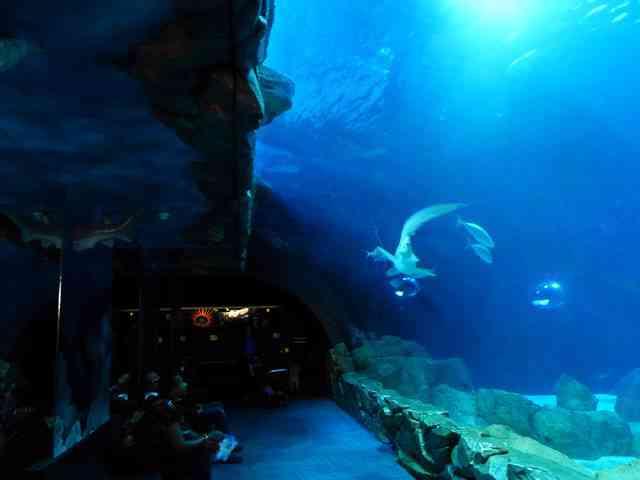 Aquarium de Paris (4)