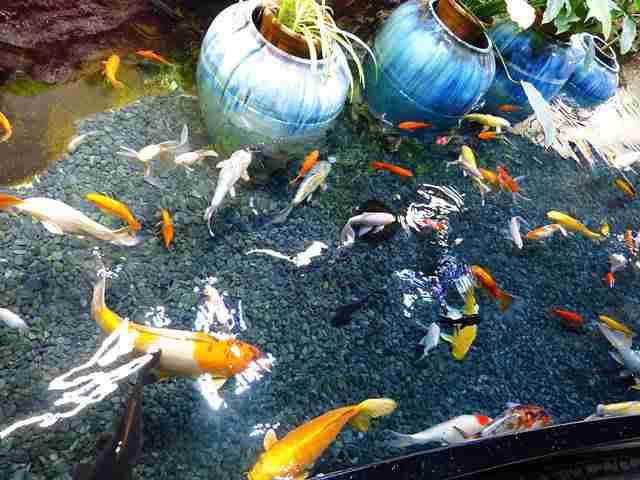 Aquarium de Paris (5)