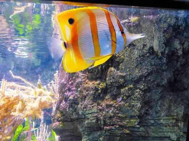 Aquarium de Paris (9)